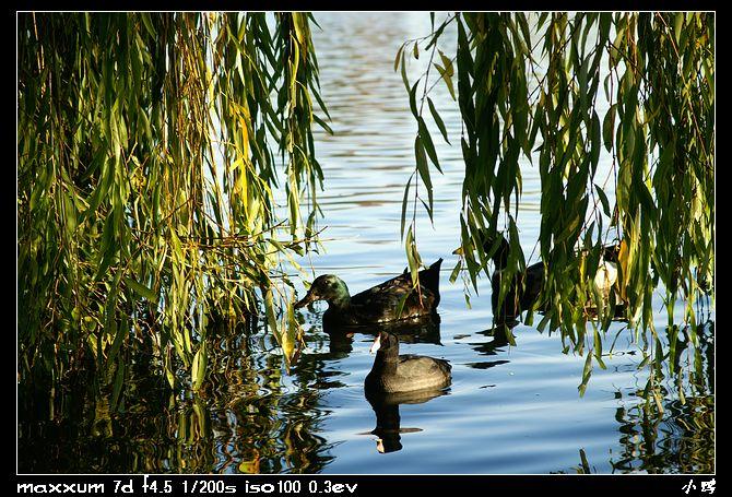 open_img(&#39http://gallery.ducknest.com/albums/album173/nEO_IMG_PICT6923.jpg&#39)