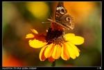 open_img(&#39http://gallery.ducknest.com/albums/album296/nEO_IMG_PICT0552.thumb.jpg&#39)
