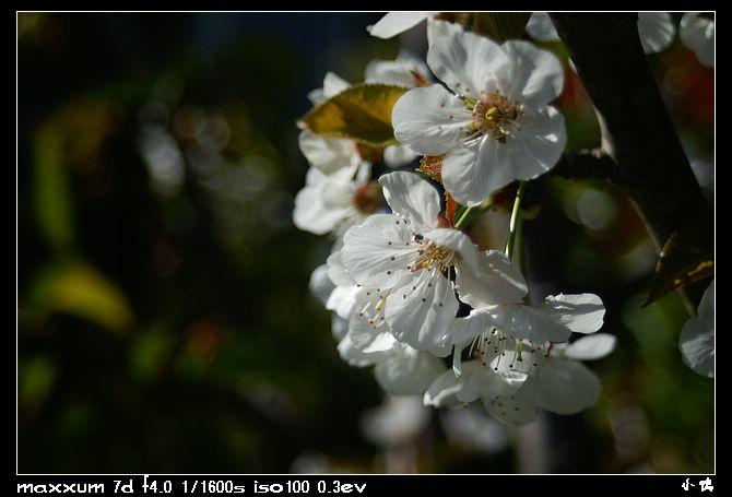 nEO IMG PICT9330