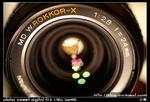 封面相片: MD W.Rokkor-X 24 F2.8