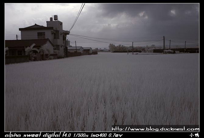 nEO IMG PICT0012