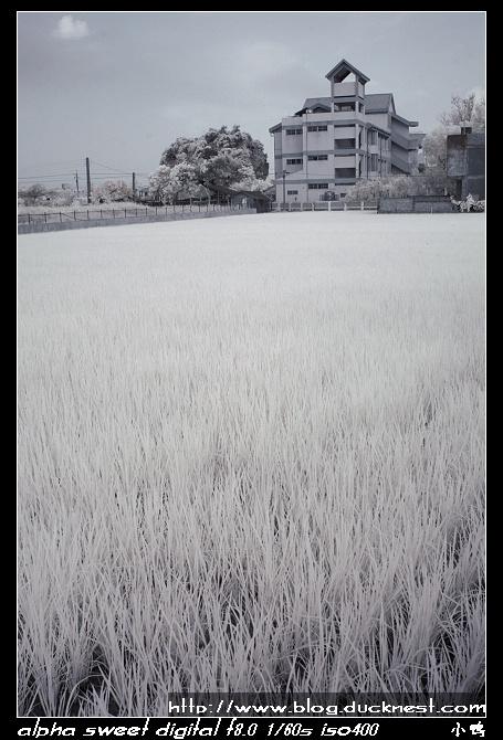 nEO IMG PICT0015