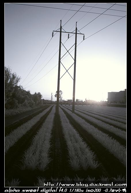 nEO IMG PICT0182