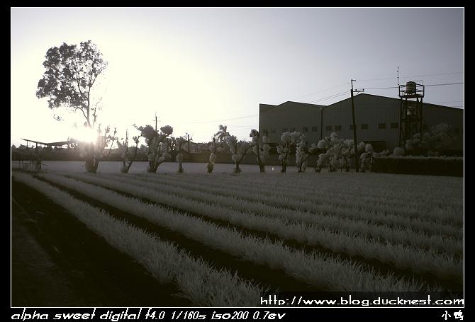 nEO IMG PICT0184