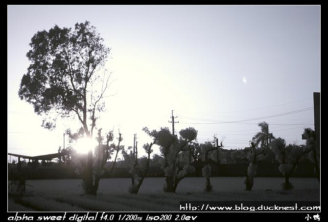 nEO IMG PICT0187