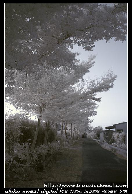 nEO IMG PICT0205