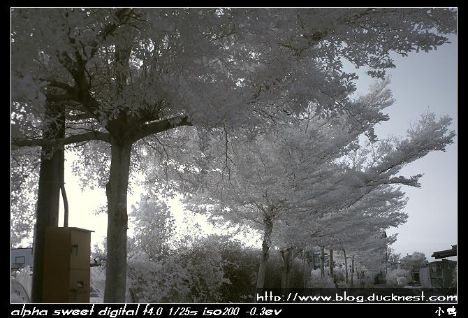 nEO IMG PICT0206